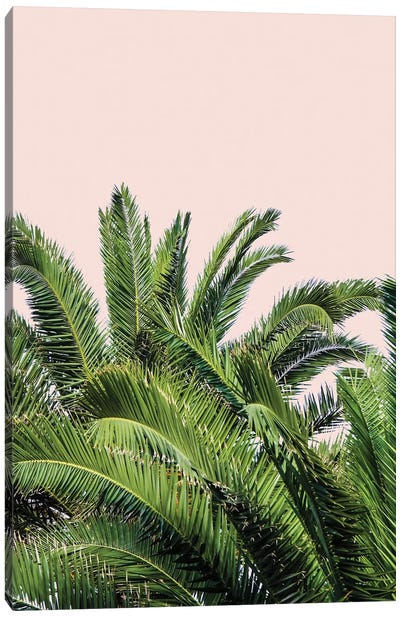 Tropical Leaves on Blush II Canvas Art Print