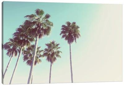 Palms Against The Evening Sky Canvas Art Print