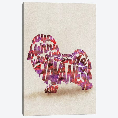 Havanese Canvas Print #ADA34} by Ayse Deniz Akerman Canvas Art Print