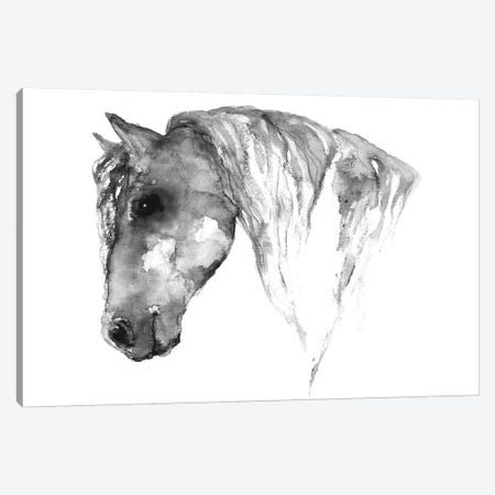 Grey Horse Canvas Print #ADE21} by ANDA Design Canvas Print