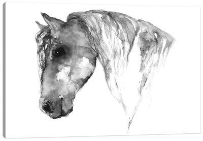 Grey Horse Canvas Art Print
