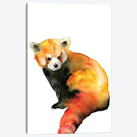 Red Panda Canvas Print #ADE47} by ANDA Design Canvas Art