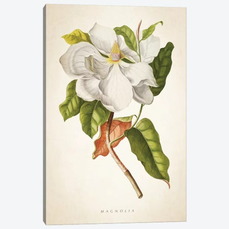 Magnolia Botanical Print I 3-Piece Canvas #ADP3038} by Aged Pixel Canvas Artwork