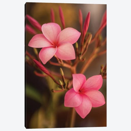 Pink Flowers Canvas Print #ADP3068} by Aged Pixel Canvas Print