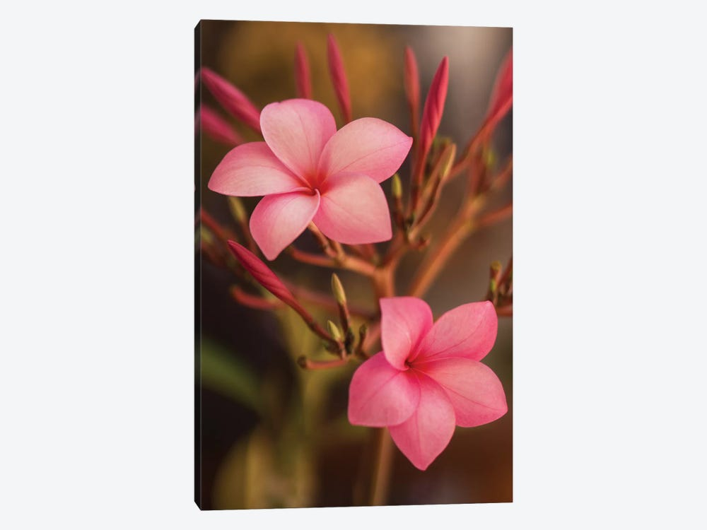 Pink Flowers by Aged Pixel 1-piece Canvas Art