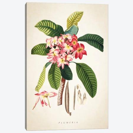 Plumeria Botanical Print Canvas Print #ADP3070} by Aged Pixel Canvas Art