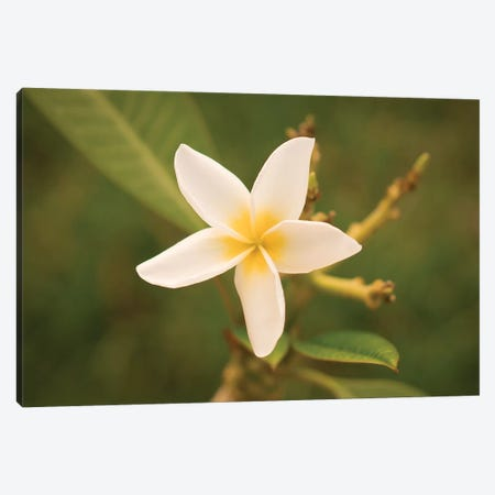 White Flower Canvas Print #ADP3154} by Aged Pixel Canvas Art
