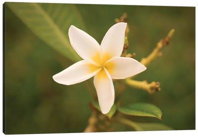 White Flower Canvas Art Print