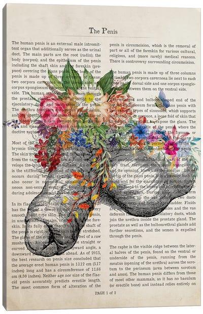 Penis Flower Anatomy Print Canvas Art Print