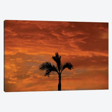 Alone Palm Tree Into Red Sunse Canvas Print #ADT527} by Alessandro Della Torre Canvas Artwork