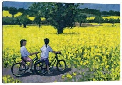 Yellow Field, Kedleston, Derby Canvas Art Print