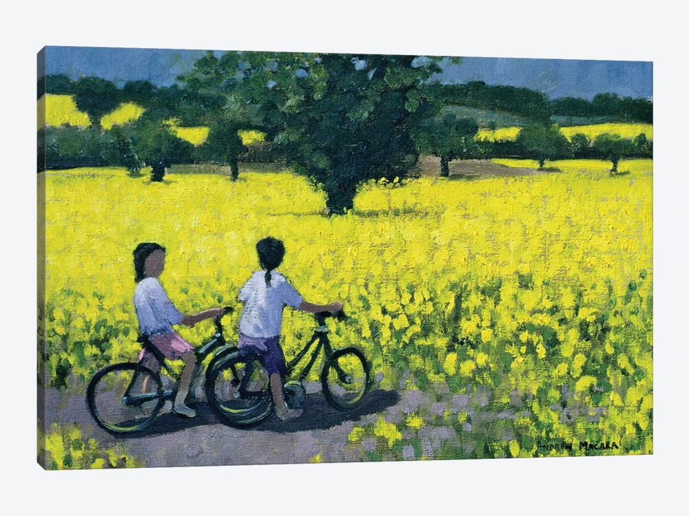 Yellow Field, Kedleston, Derby by Andrew Macara 1-piece Art Print