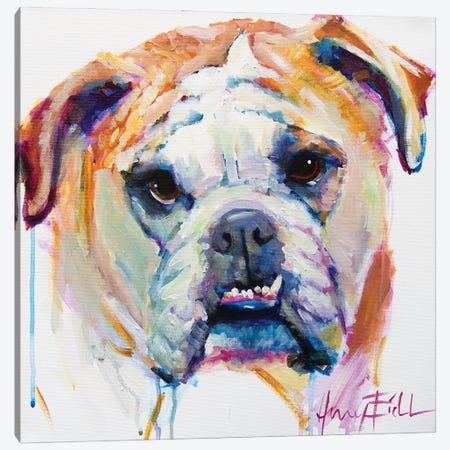 Bulldog Canvas Print #AEC17} by Amy Eichler Canvas Artwork