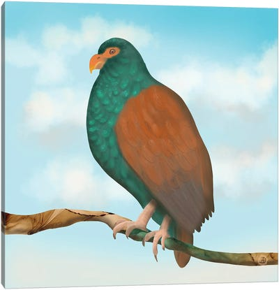 The Tooth Billed Pigeon (Little Dodo) Canvas Art Print