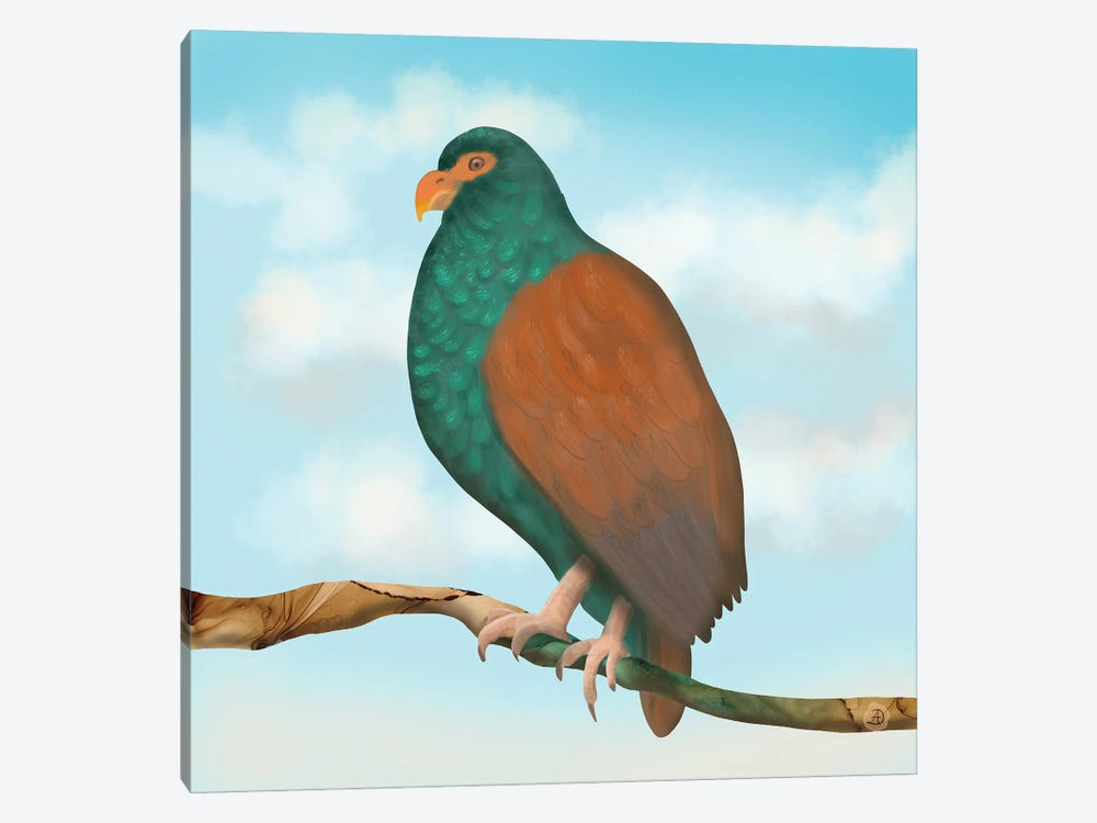 The Tooth Billed Pigeon (Little Dodo) by Andreea Dumez 1-piece Canvas Print