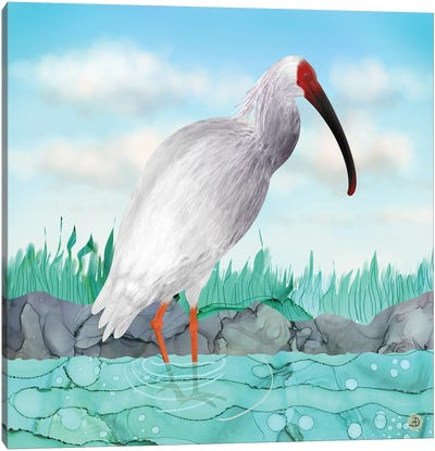 Crested Ibis - Japanese Rare Bird Canvas Art Print