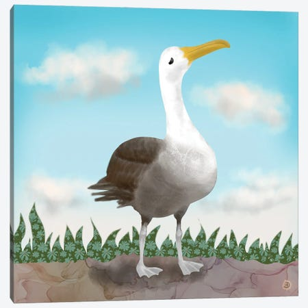 Galapagos Waved Albatross Canvas Print #AEE69} by Andreea Dumez Canvas Artwork