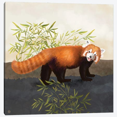 The Red Panda And The Bamboo Canvas Print #AEE75} by Andreea Dumez Canvas Art