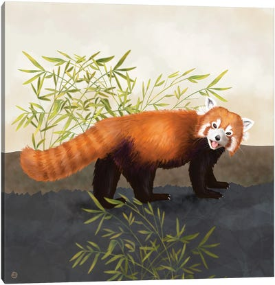 The Red Panda And The Bamboo Canvas Art Print