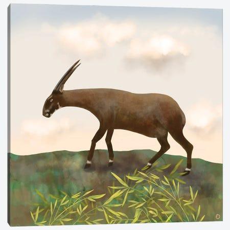 Saola - The Asian Unicorn - Rarest Animal On Earth Canvas Print #AEE83} by Andreea Dumez Canvas Wall Art
