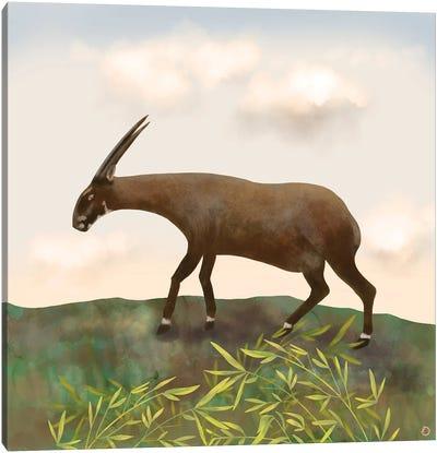 Saola - The Asian Unicorn - Rarest Animal On Earth Canvas Art Print