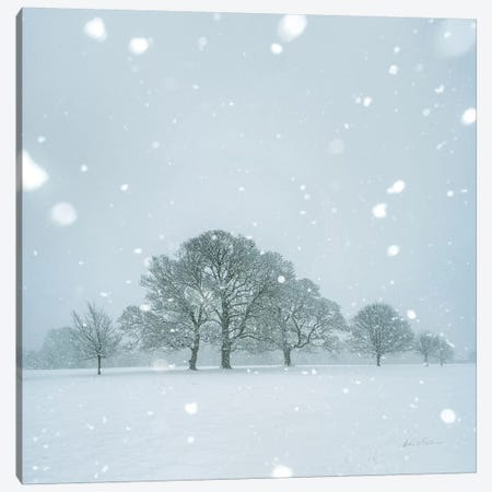 Winter Landscape I Canvas Print #AEI12} by Andre Eichman Canvas Art Print