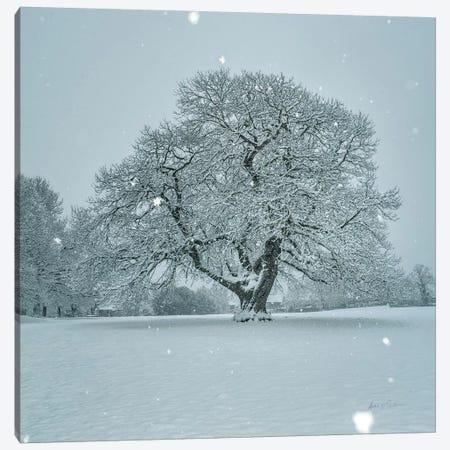 Winter Landscape III Canvas Print #AEI13} by Andre Eichman Canvas Art Print