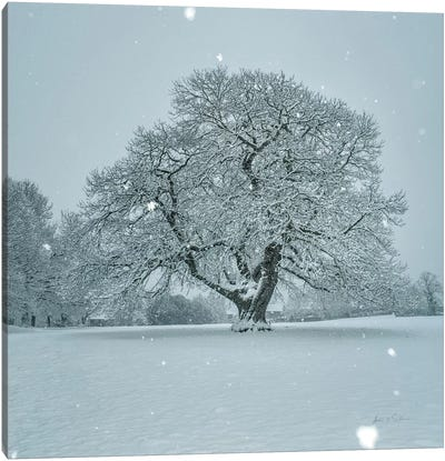 Winter Landscape III Canvas Art Print