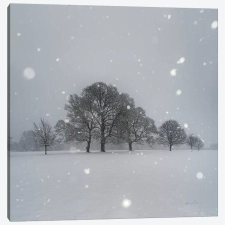 Trees in Snow Canvas Print #AEI16} by Andre Eichman Canvas Wall Art