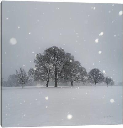 Trees in Snow Canvas Art Print
