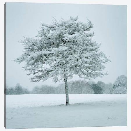 Winter Landscape IV Canvas Print #AEI18} by Andre Eichman Canvas Print