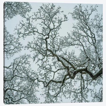 Winter Trees Canvas Print #AEI19} by Andre Eichman Canvas Print