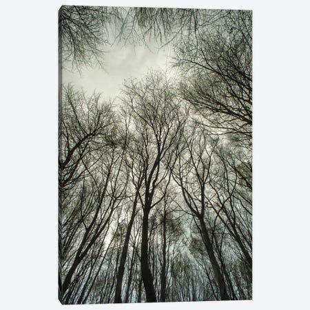 Light Through The Trees Canvas Print #AEI1} by Andre Eichman Canvas Wall Art