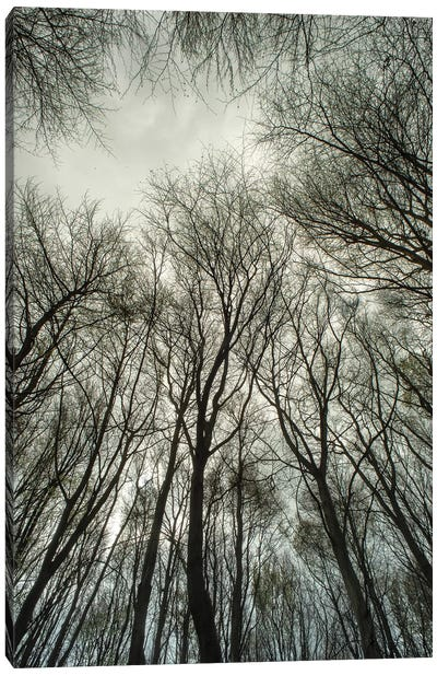 Light Through The Trees Canvas Art Print