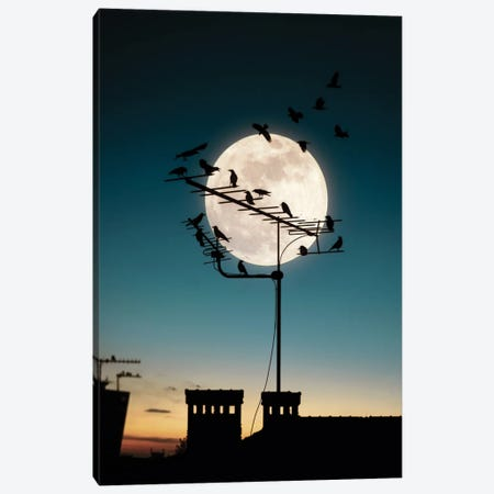 Moon And Birds Canvas Print #AEV62} by Abdullah Evindar Canvas Art Print