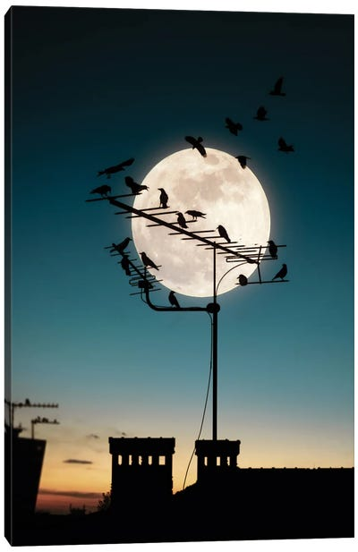 Moon And Birds Canvas Art Print