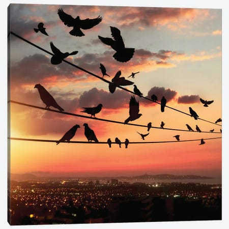 Bird's Sunset Canvas Print #AEV8} by Abdullah Evindar Canvas Art