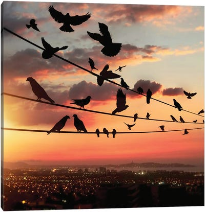 Bird's Sunset Canvas Art Print