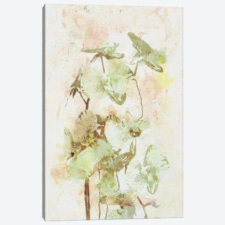 Orchids Canvas Print #AEZ477} by Angel Estevez Canvas Art Print