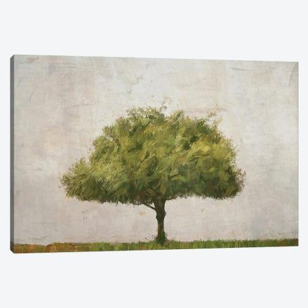 Tree at Mount Soledad Canvas Print #AFK104} by Alison Frank Art Print