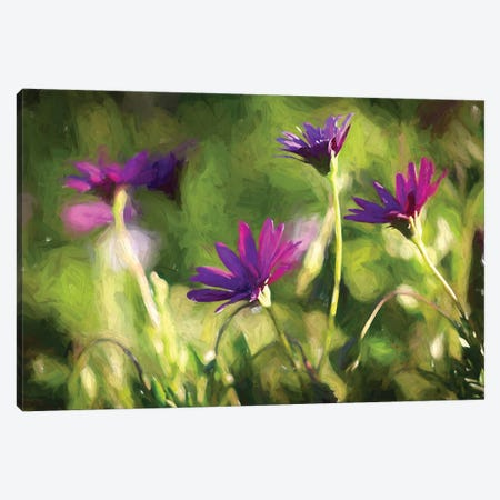 Painted Purple Daisies Canvas Print #AFK105} by Alison Frank Art Print