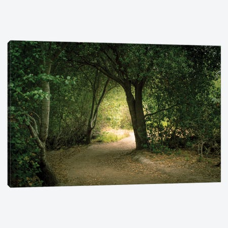 Light Through The Tree Tunnel Canvas Print #AFK10} by Alison Frank Art Print