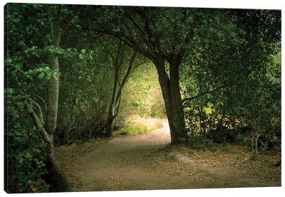 Light Through The Tree Tunnel Canvas Art Print