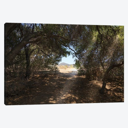 Forest Exit Canvas Print #AFK121} by Alison Frank Canvas Artwork