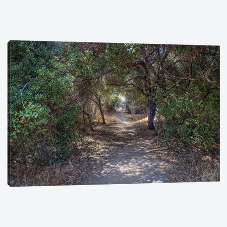 Trail In The Woods Canvas Print #AFK123} by Alison Frank Canvas Wall Art