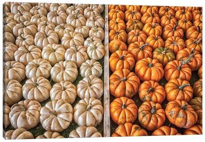 Mini Pumpkins Canvas Art Print