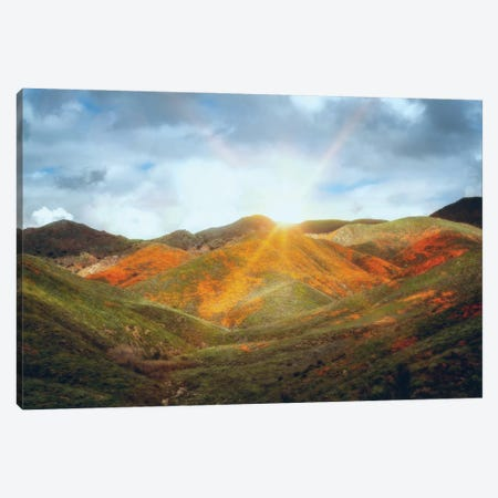 Superbloom Sunrise Canvas Print #AFK36} by Alison Frank Canvas Art