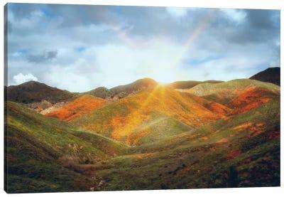 Superbloom Sunrise Canvas Art Print