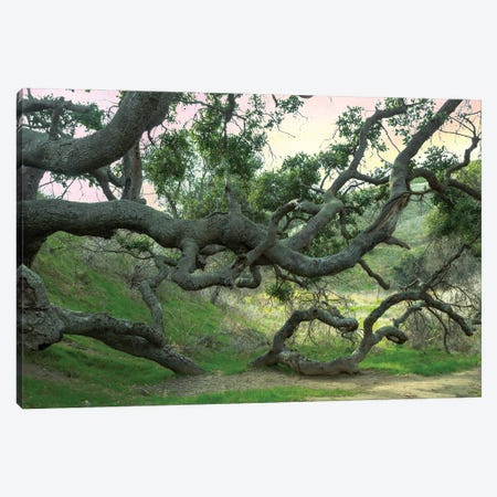Creepy Tree Canvas Print #AFK43} by Alison Frank Canvas Art