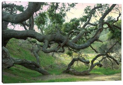Creepy Tree Canvas Art Print